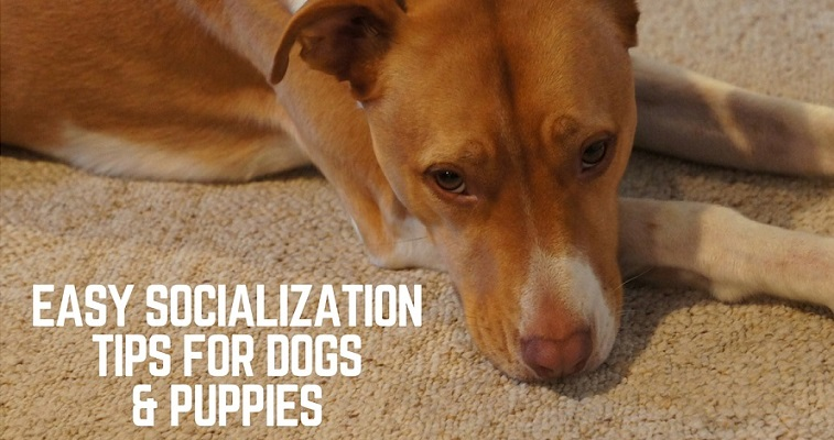 Socialization tips for dogs