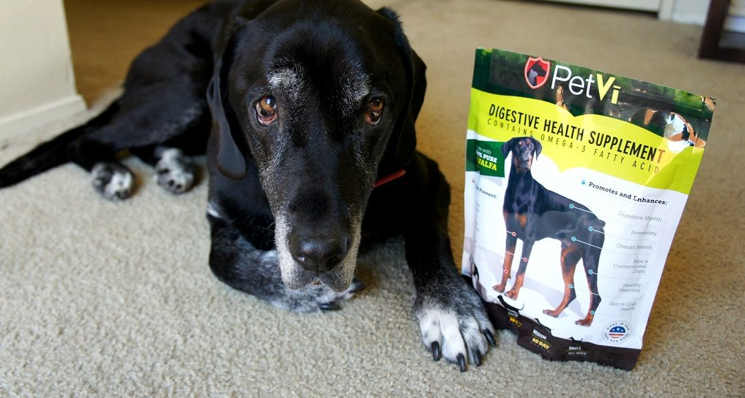 How is Ace Doing? PetVi Probiotics Are Helping My Dog #Giveaway