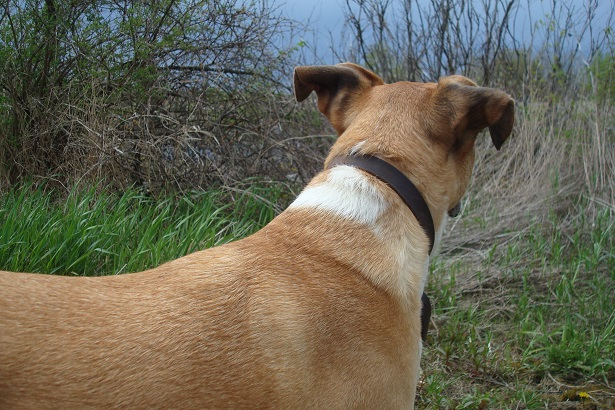 How to Increase Your Dog's Focus on Walks—2 Commands