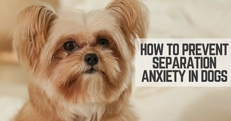 How To Prevent Separation Anxiety In Dogs Thatmuttcom