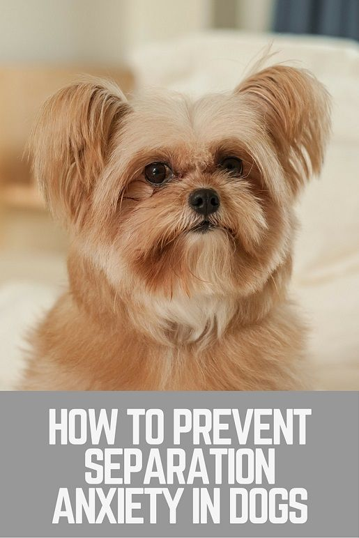 How To Prevent Separation Anxiety In Dogs Thatmutt Com