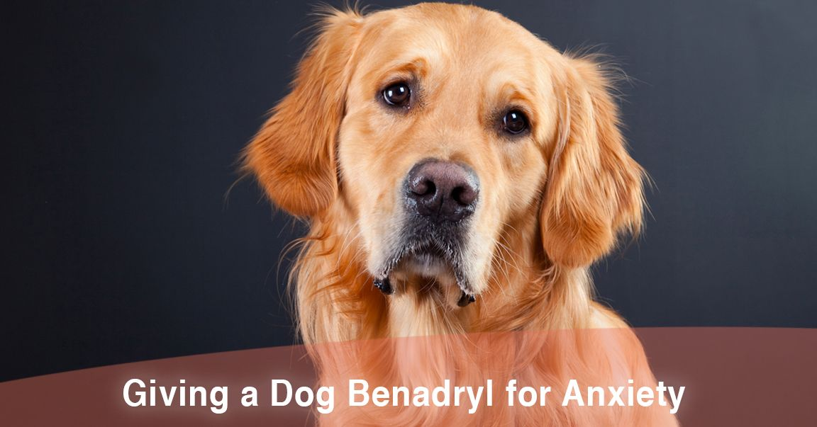 Benadryl For Dogs During Fireworks Does It Work Thatmuttcom