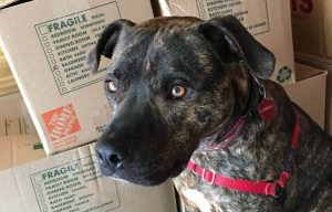 How to Help Your Dog Adjust During A Move