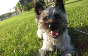 Top Questions About Starting a Dog Walking Business