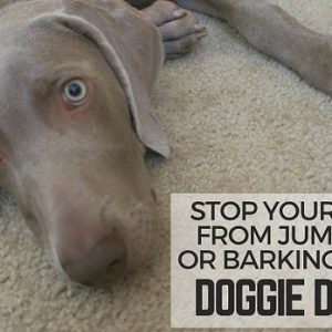 How to Stop a Dog's Jumping—Doggie Don't Device Coupon Code