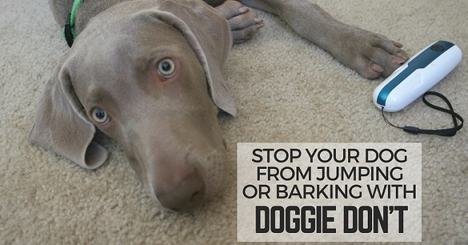 Stop a dog from jumping with the Doggie Don't Device