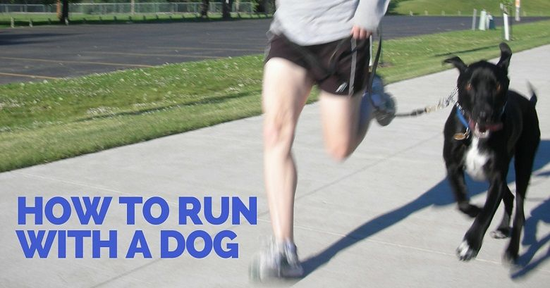 How to run with a dog - That Mutt