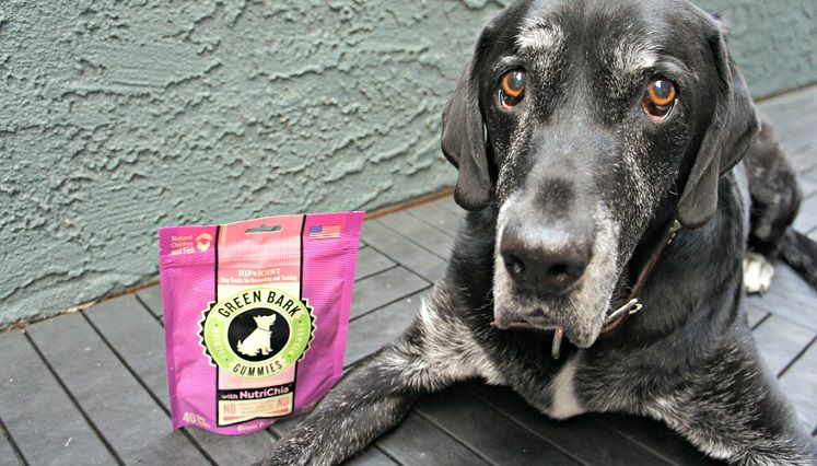 October Green Bark Gummies Dog Treat Giveaway—10 Winners