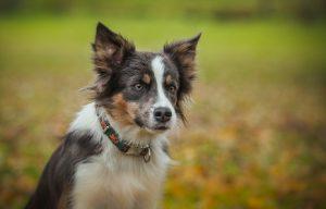 How to Teach Your Dog to Twirl #MuttTricks