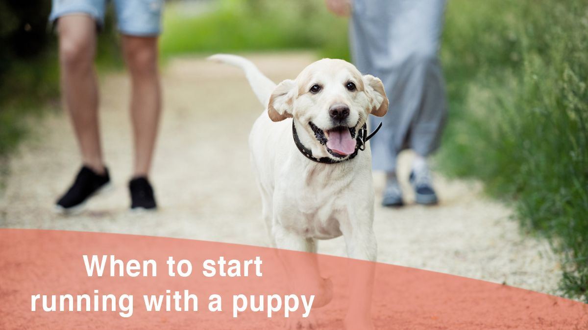 When is it Safe to Start Running With a Puppy? My Thoughts