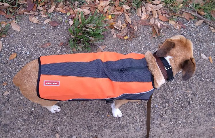 EzyDog Element Jacket Review and Coupon Code