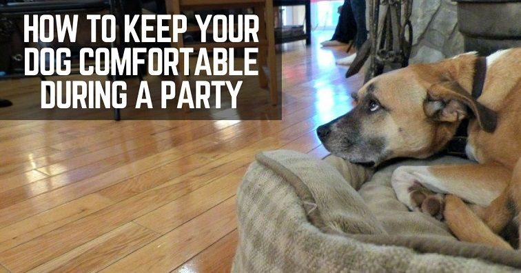 How to keep your dog comfortable during a party