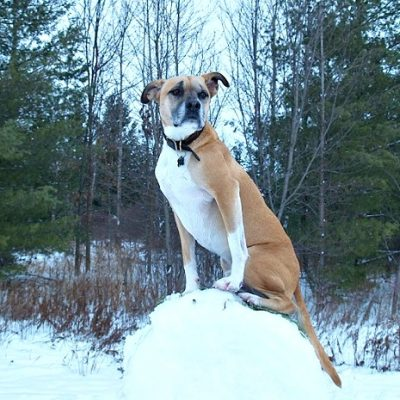 Holiday Hiking Tradition With Your Dog