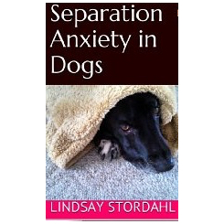 How to End Separation Anxiety in Dogs