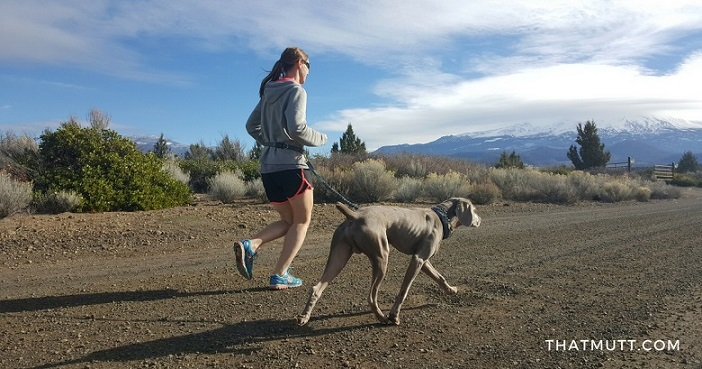 Training for an ultra marathon with your dog