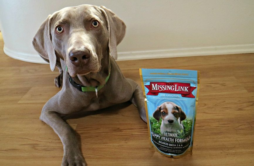 The Missing Link supplements for dogs review