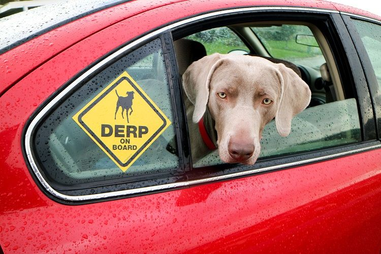 Get Your Free 'Derp On Board' Window Sticker