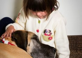 What Does A Therapy Dog Do?
