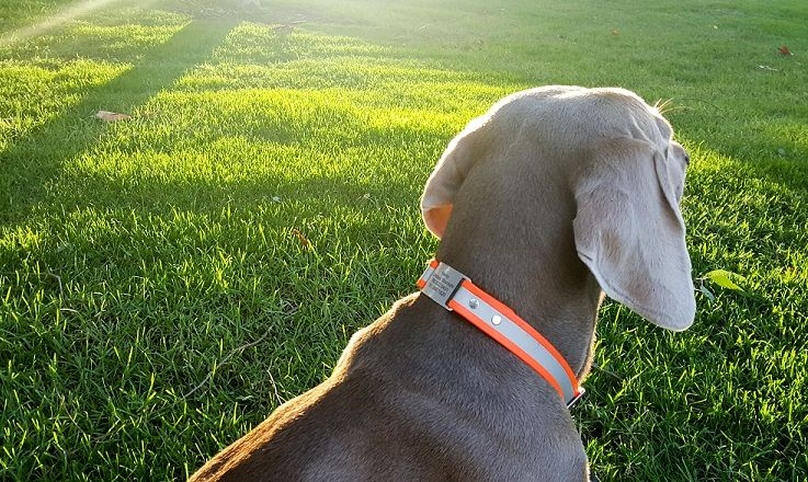 Reflective waterproof dog collar
