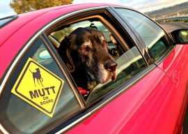 Get Your FREE Mutt Sticker, We're Celebrating 9 Years of Blogging