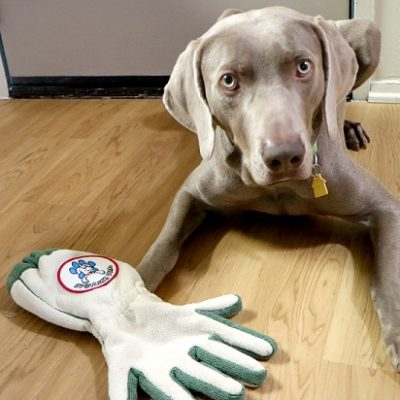 Spotless Paw Review and Coupon Code – Dog Paw Cleaning Glove