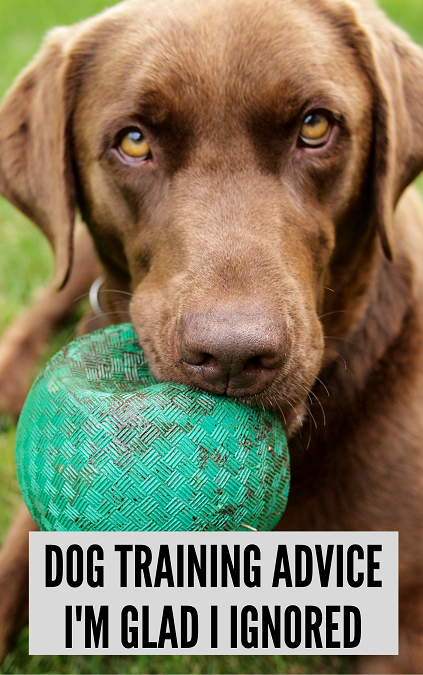 Dog training advice I'm glad I ignored