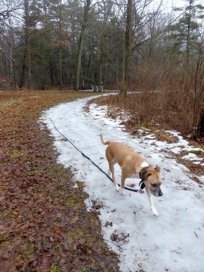 How to get your dog to behave off leash