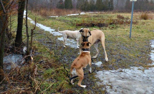 How to trust your dog off leash