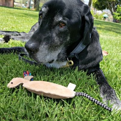 Mighty Paw Leather Squeaky Toys Review and Coupon Code