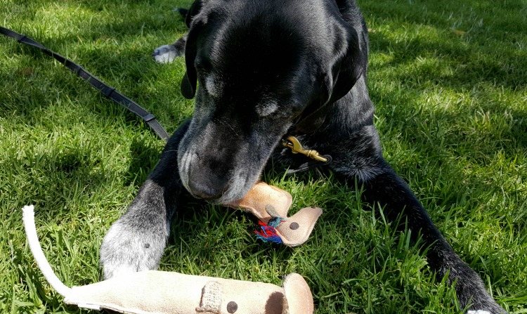 Ace and his toys from Mighty Paw