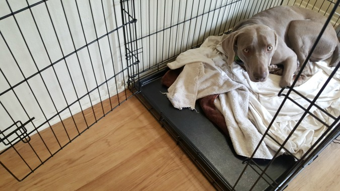i prefer a wire crate for my dogs because you can easily fold it down for storage or travel our crate from carlson pet products fits in the trunk of my