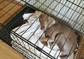 Is it Mean to Use a Crate for Dogs and Puppies?