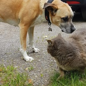 Introducing Your Dog to Outdoor Cats