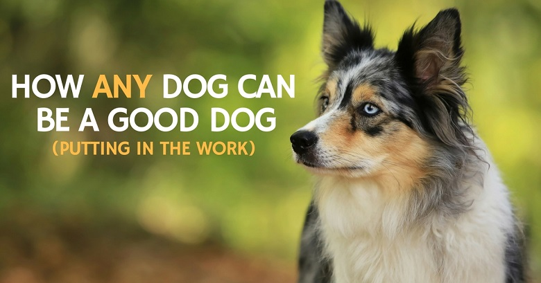 How any dog can be a good dog