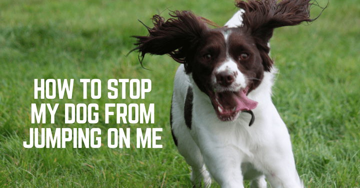 How to stop my dog from jumping on me