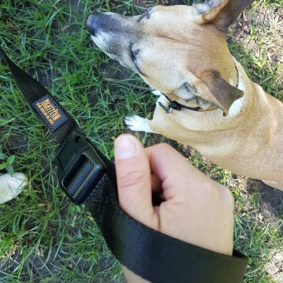 Mighty Paw Long Training Leash Review and Promo Code