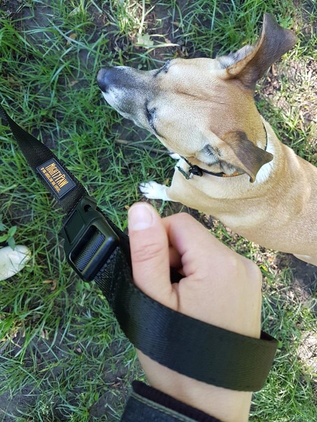 Mighty Paw long training leash