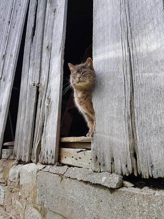 Ralph the barn cat