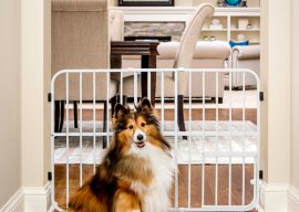 How to Stop Your Dog From Destroying Your Stuff – Pet Gates