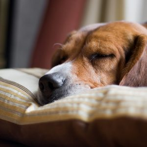 How to Get Your Dog to Sleep In