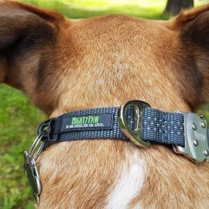 Mighty Paw Metal Buckle Collar Review