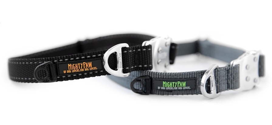 Mighty Paw metal buckle collar