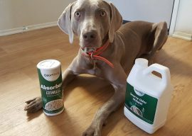 OdorKlenz Review and Coupon Code – Natural Odor Removal for Pets