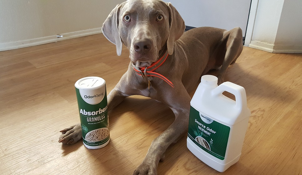 OdorKlenz review - Remove pet odors
