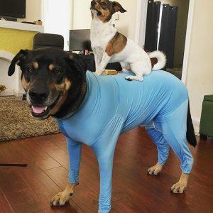 Shed Defender Reviews, Dog Onesie to Control Shedding