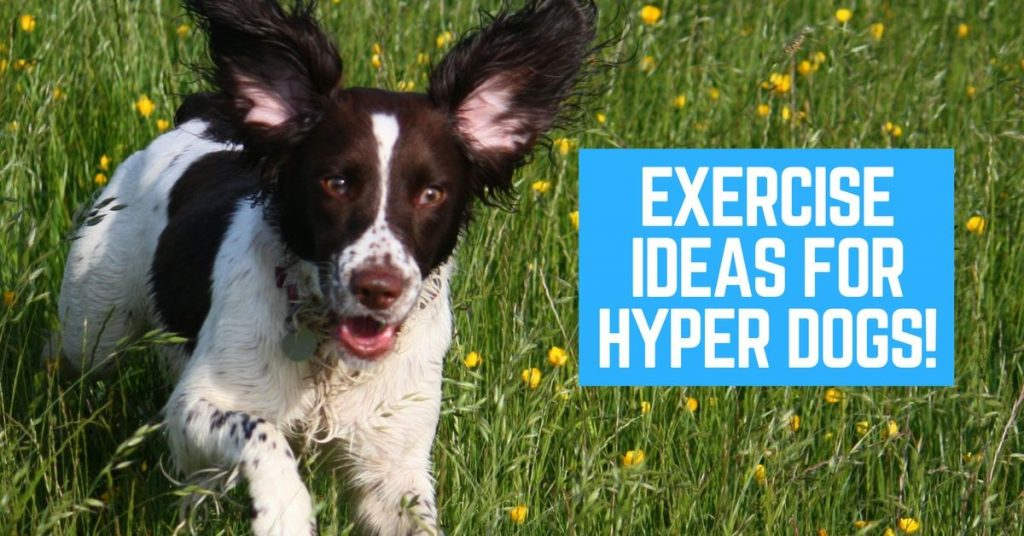 Dog exercise ideas