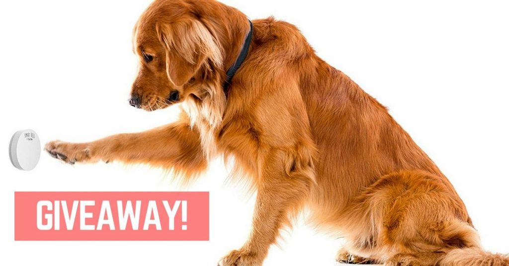 Mighty Paw dog doorbell review