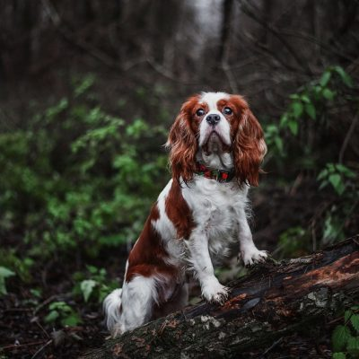 Training Walks vs Fun Walks – Does Your Dog Know the Difference?