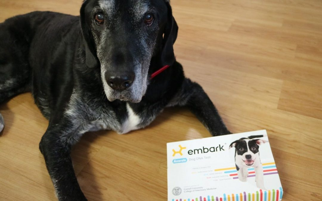 Embark Dog DNA Test Review (And Giveaway!)