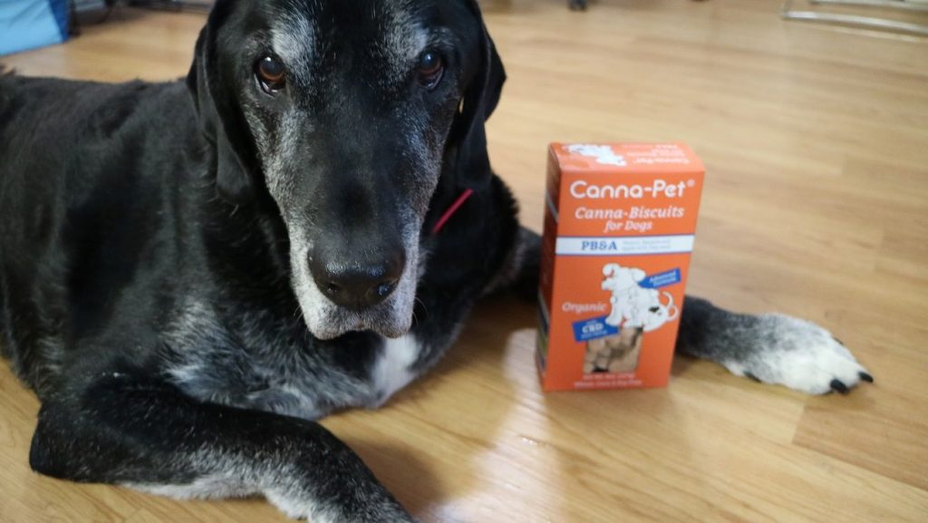 CBD dog treats - Canna Pet Review